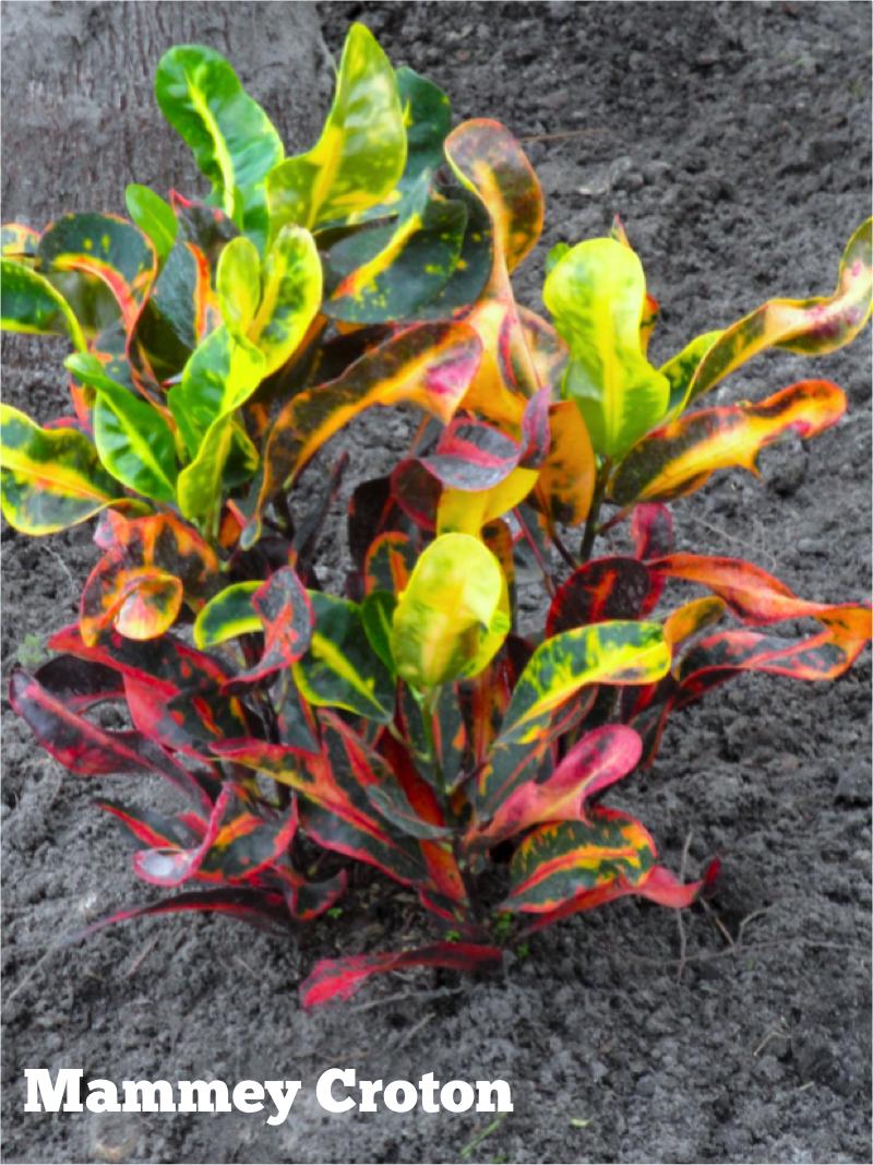 Pin on Plant List