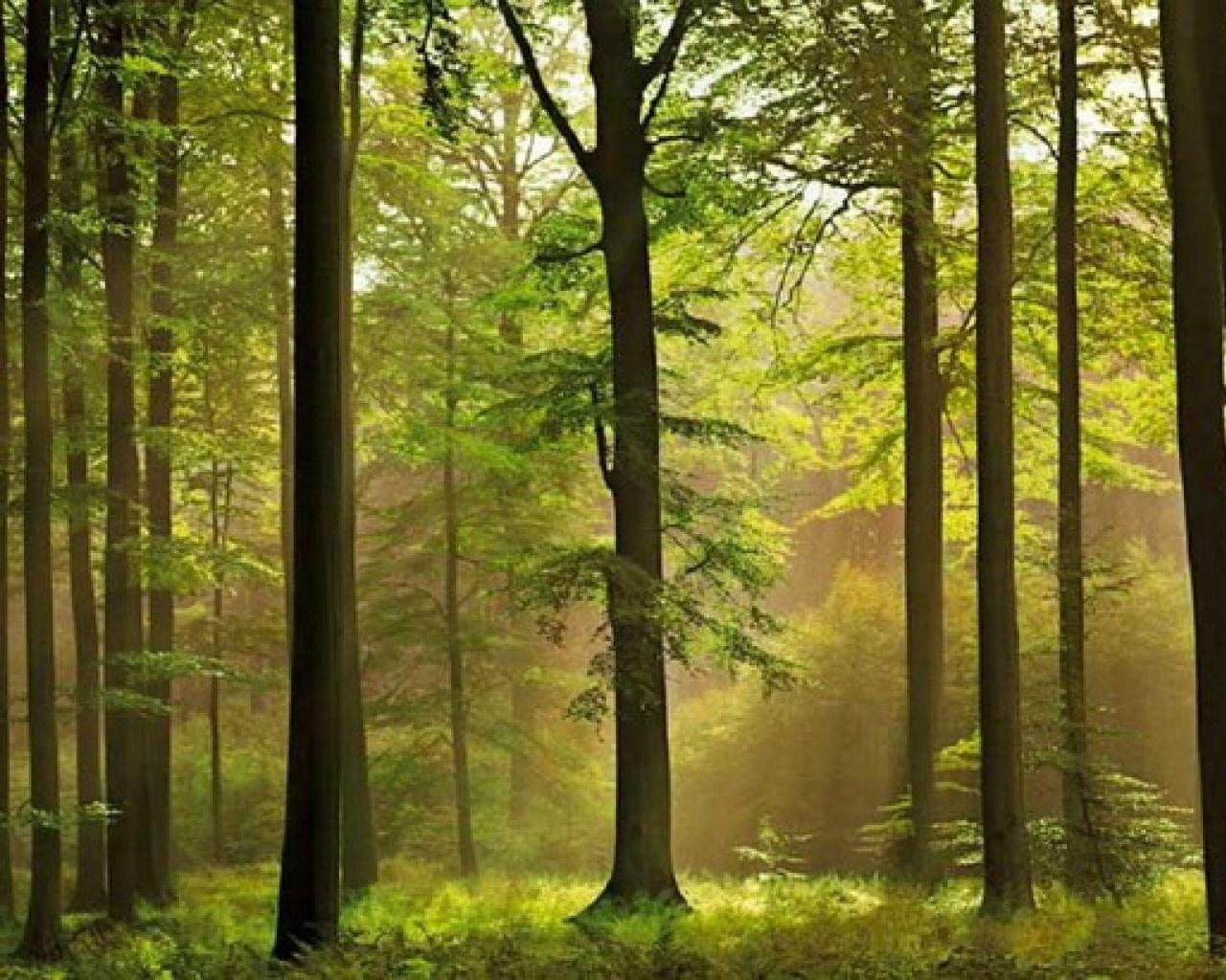 wallpaper-mural-forest-theme-traditional-wallpaper-versus-living ...