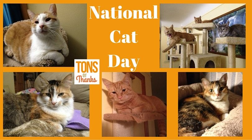 Thanking a feral cat caretaker Feral cats, National cat