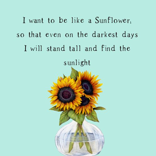 I Want To Be Like A Sunflower Charity Sparrow Sunflower Quotes Inspirational Quotes Sunflower