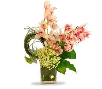 Enchanting Orchids In Houston Tx River Oaks Flower House Inc Orchid Delivery Orchids Open House Parties