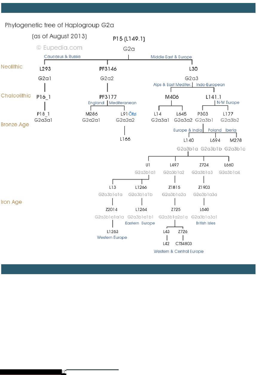Origins And History Of Haplogroup G2a Y Dna Maciamo Hay  # Saqqara Muebles Y Decoracion