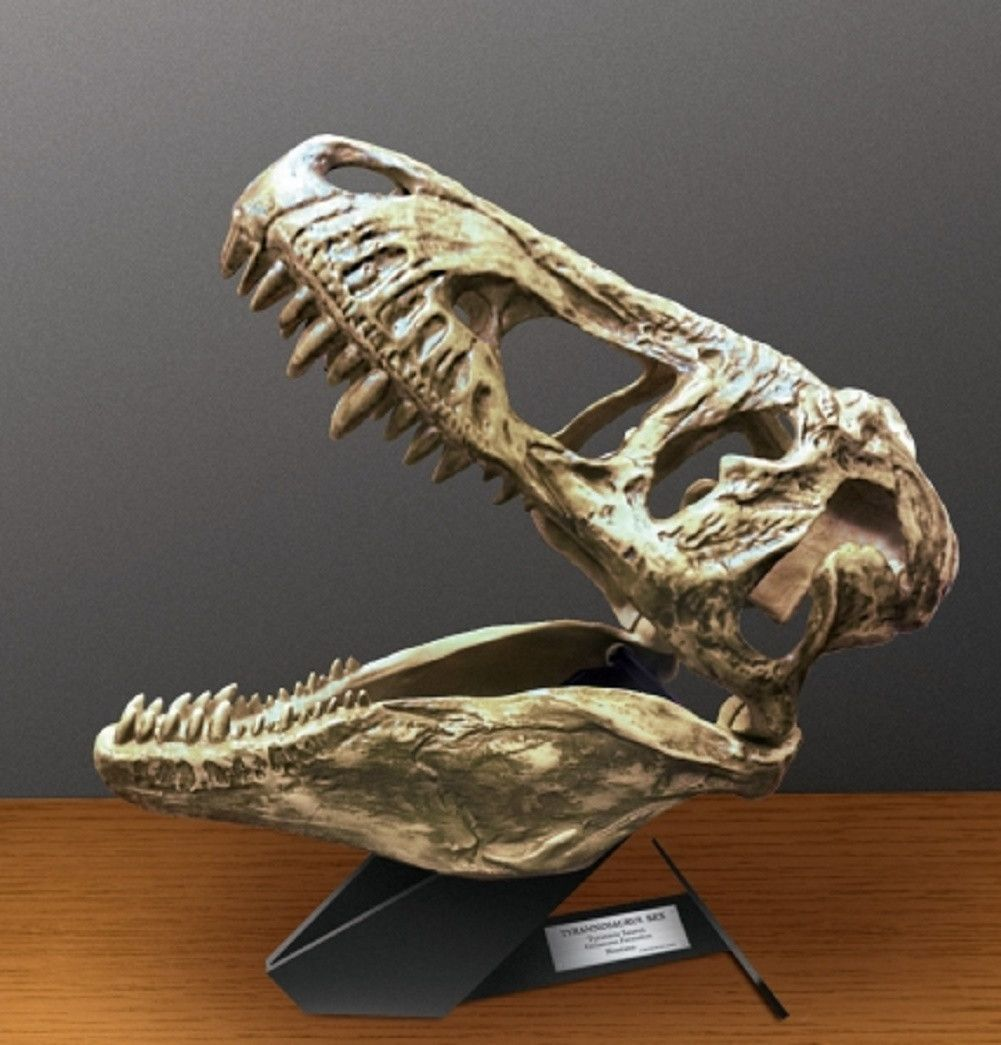 Uncle Milton In My Room T-Rex Light Up Dino Dinosaur Skull Bones Wall Decoration