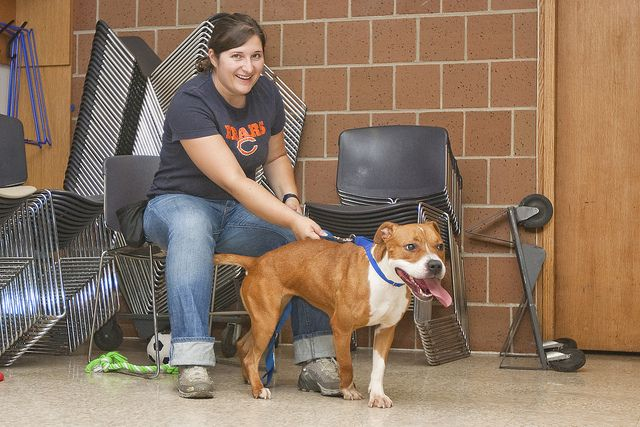 Sarasota Dog Training And Boarding Dog Training Classes Dog
