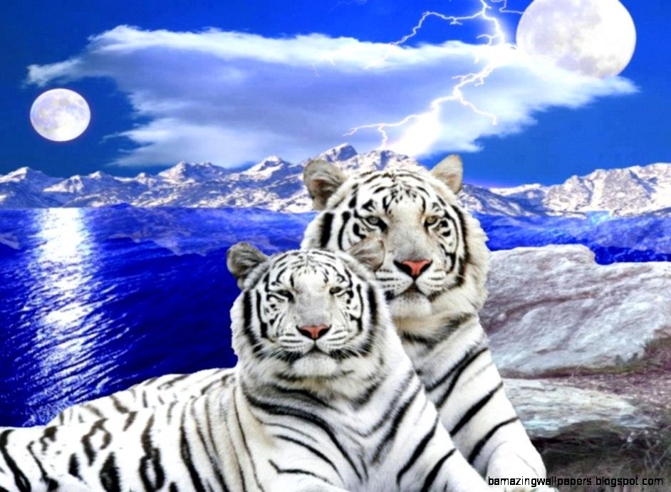 White Tiger Cubs With Blue Eyes Wallpaper White Tiger Cubs Eyes Wallpaper Cubs Wallpaper