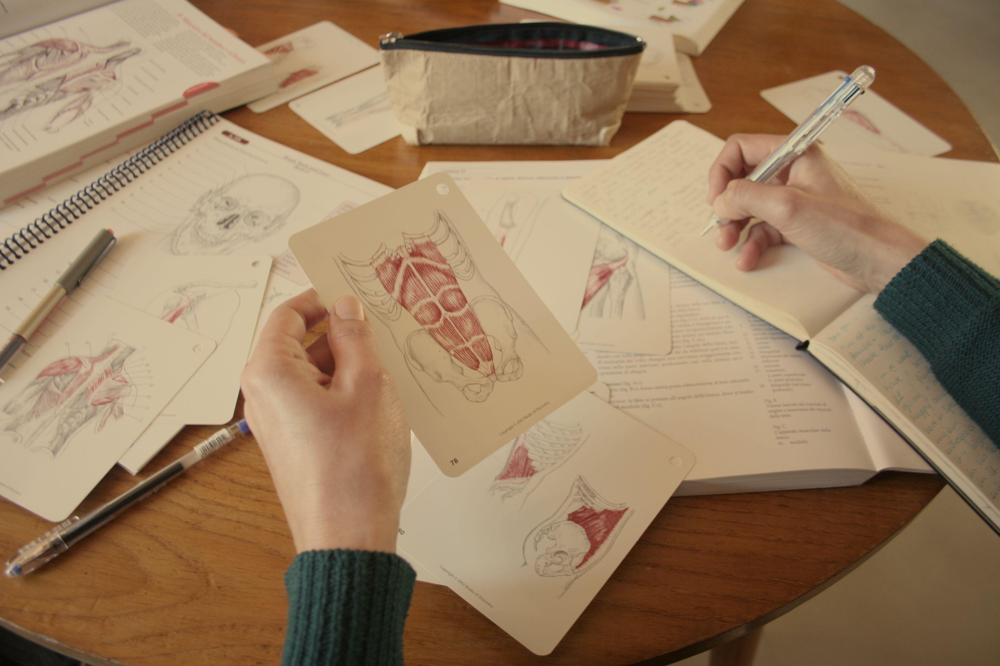 Lujo Notas De La Anatomía Del Acantilado Ornamento - Anatomía de Las ...