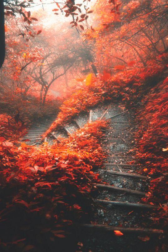 The S-Shaped Path // Hanson Mao