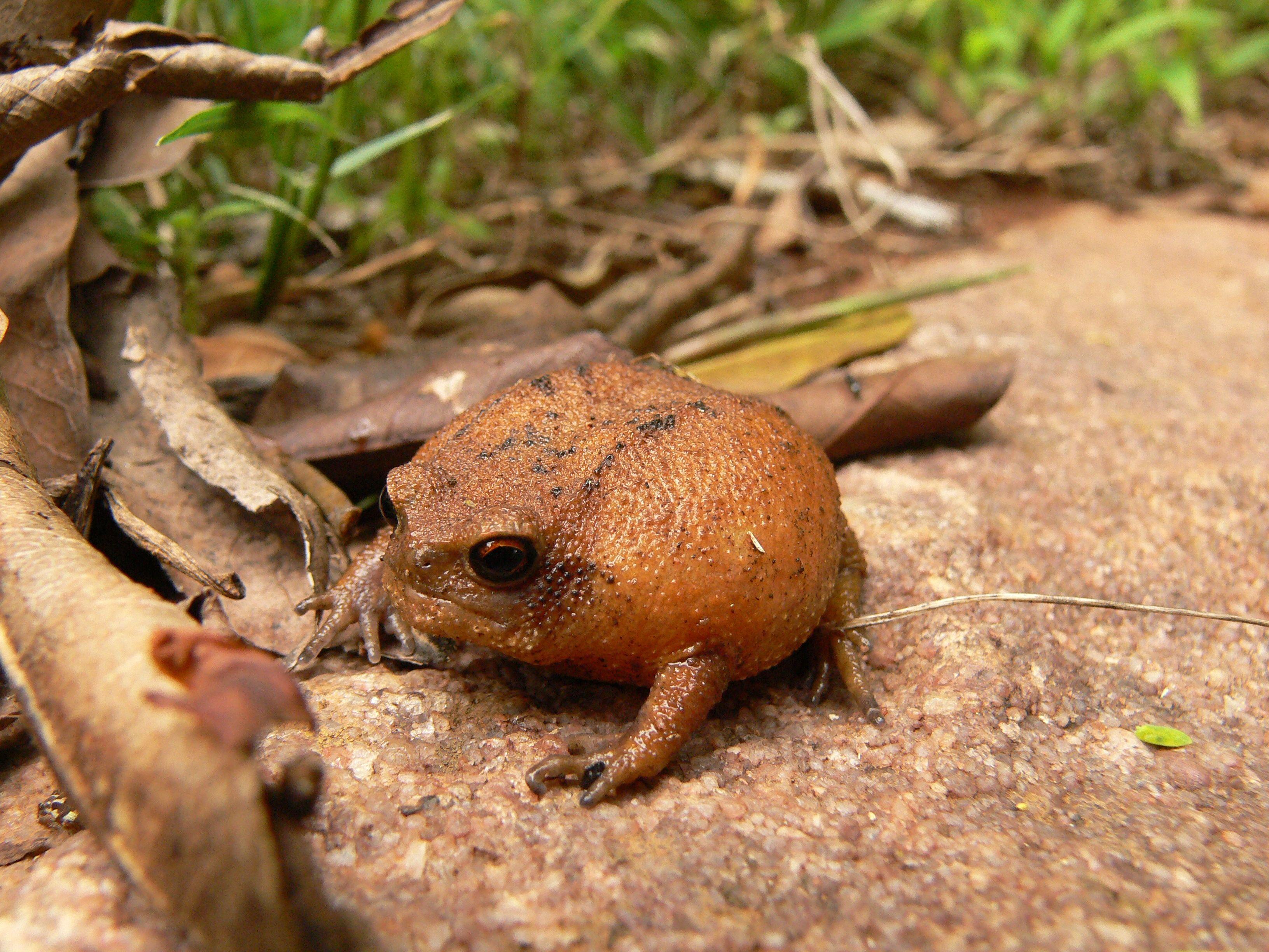 Image Result For Weird Frog