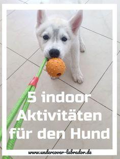 5 Indoor Aktivitäten mit Hund
