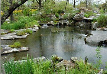 4e5133a5876d4bb8d690f69ca3862d99 - Anthony Archer Wills Designing Water Gardens