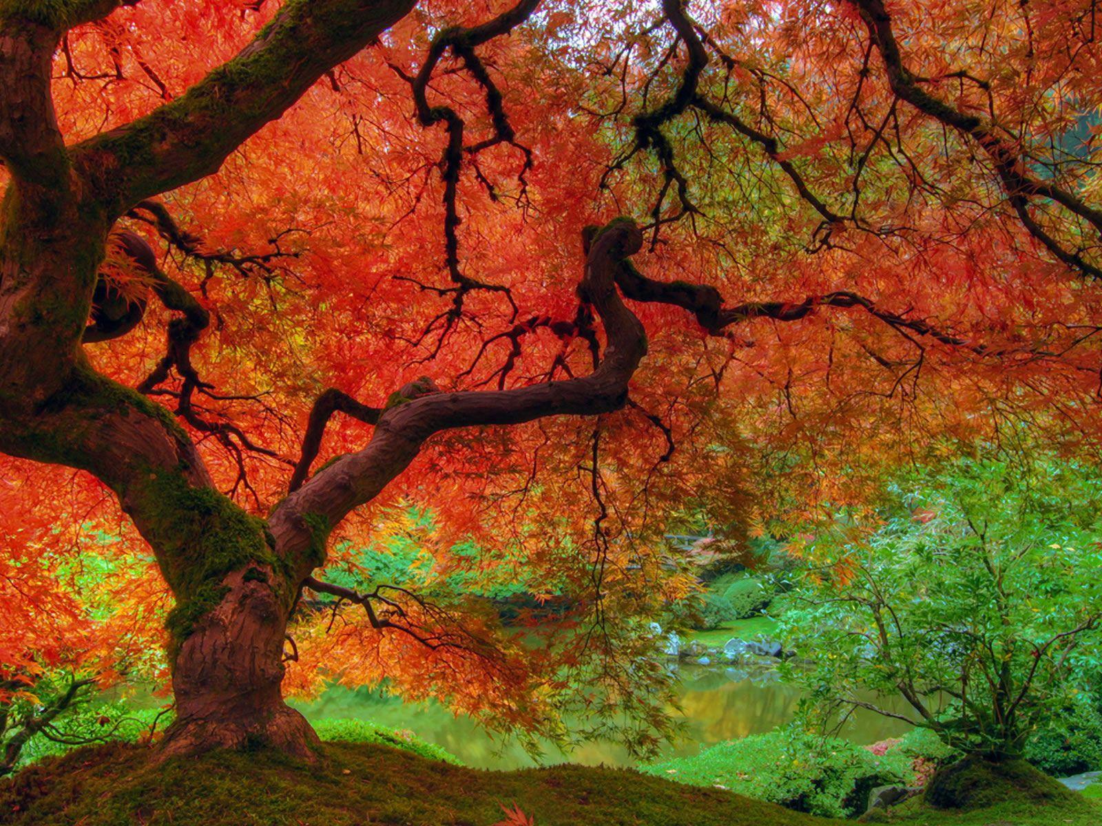Fall Colors Wallpaper 1600x1200 QpFoTQsc Fall wallpaper