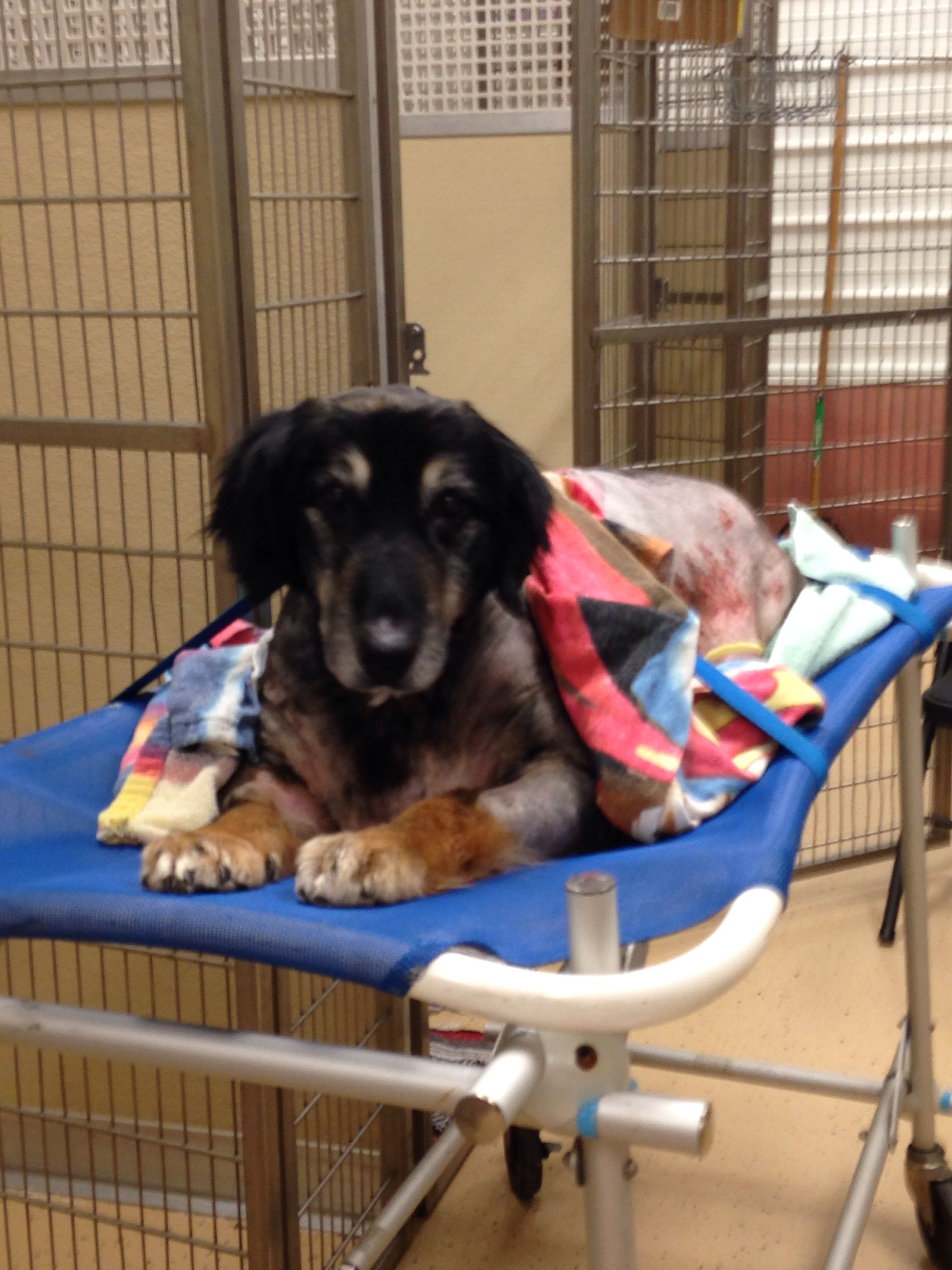 Bobaby after his surgery, he was not allowed to walk for a