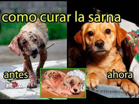 que medicamento cura la sarna en perros