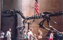 Super Natural History Museum New York Dinosaurs Ideas #historyofdinosaurs