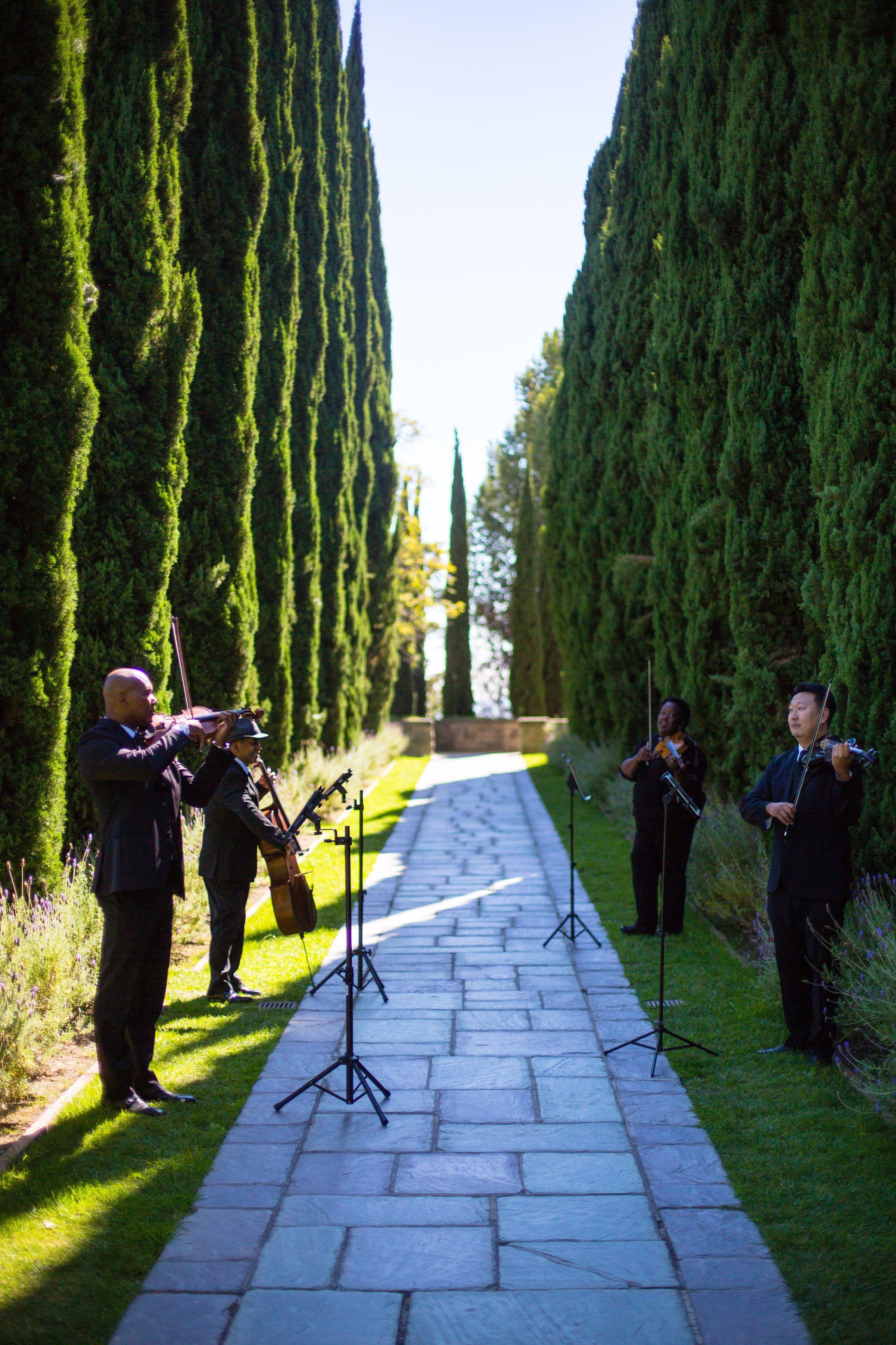 Pin on String Quartet Wedding