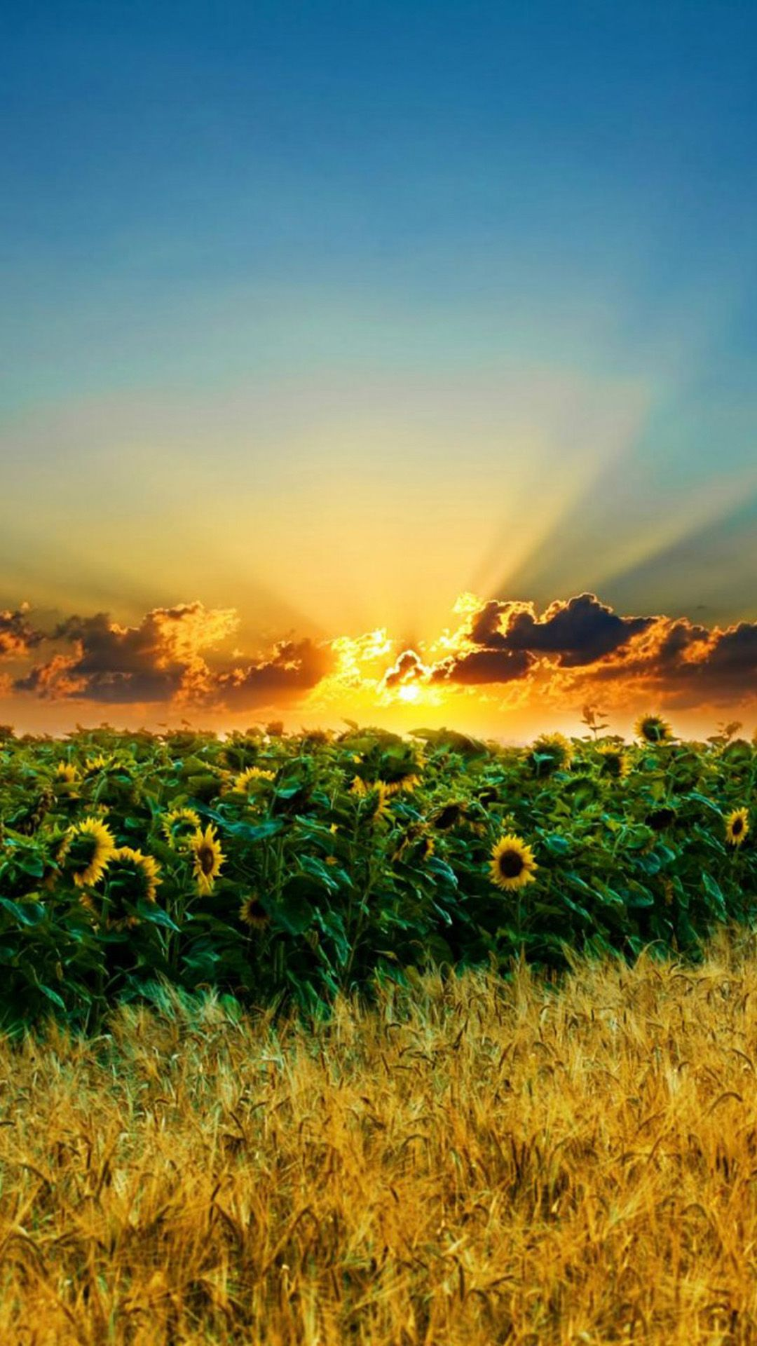 Sunset Galaxy S5 Wallpapers 54 Jpg 1080 1920 Nature Iphone
