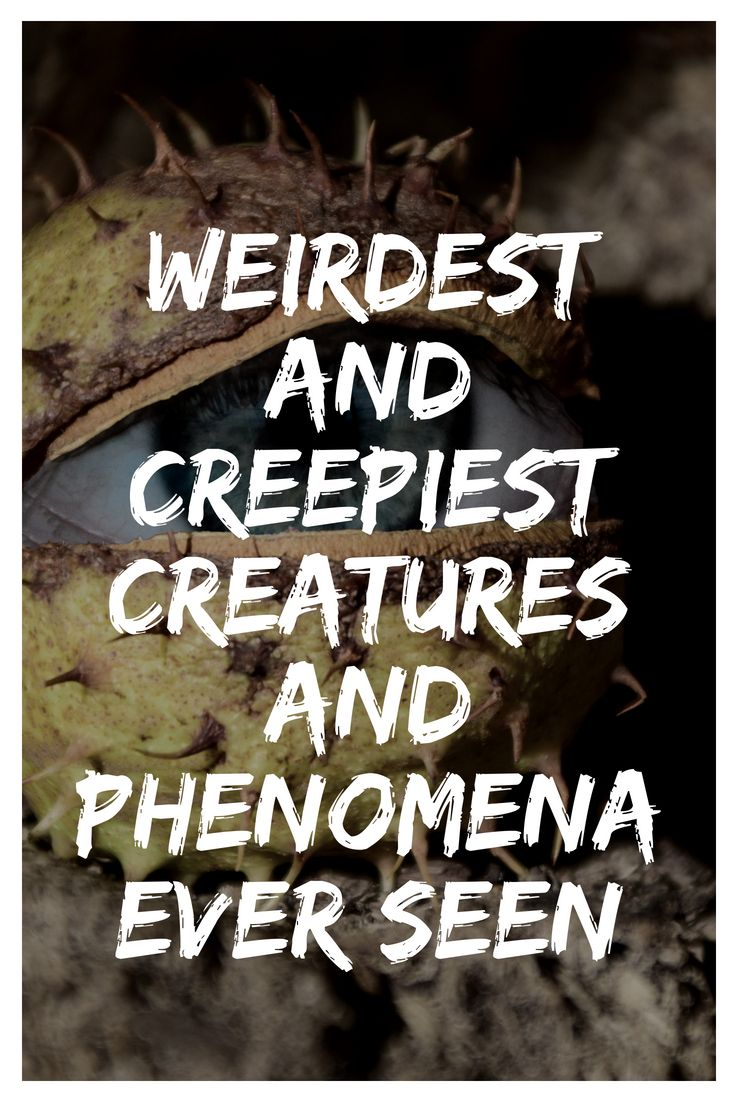 People Share Pictures Of Weirdest And Creepiest Creatures And Phenomena Ever Seen Just For Fun Pinterest Weird Creatures Creatures And Weird