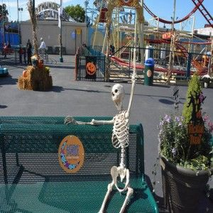 explore coney island brooklyn and more halloween harvest