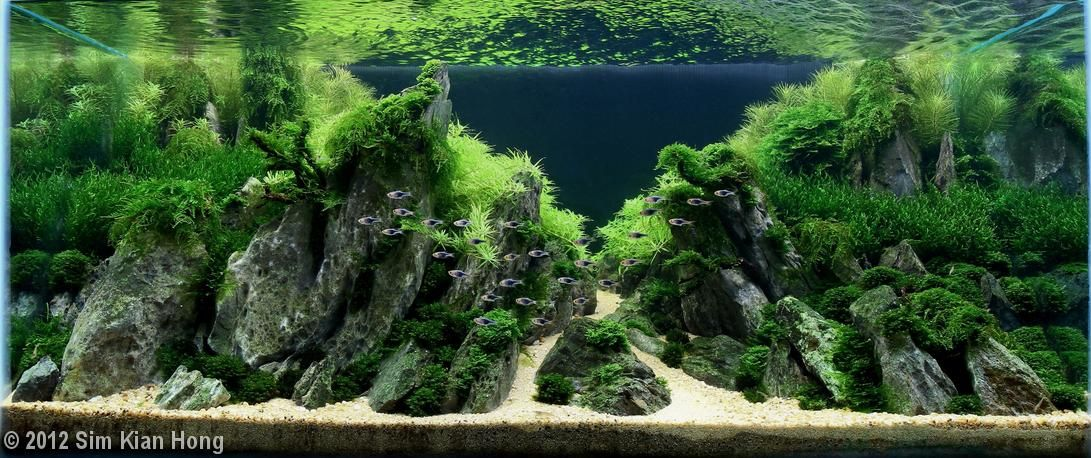 Land of the Glorious Mountains | AquaScaping World Forum