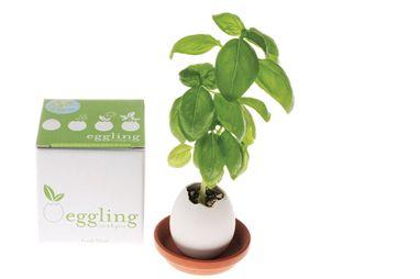OFERTAS AMIGO INVISIBLE MEELOW, Un huevo que esconde una planta en su interior!! Egglings de Lavanda, Petunia o Margaritas.