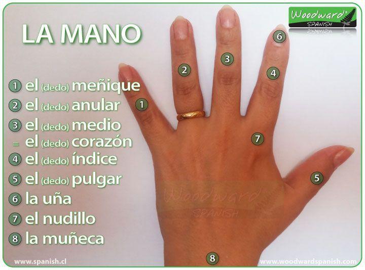 Las Partes De La Mano Y Los Nombres De Los Dedos En Espanol Ele