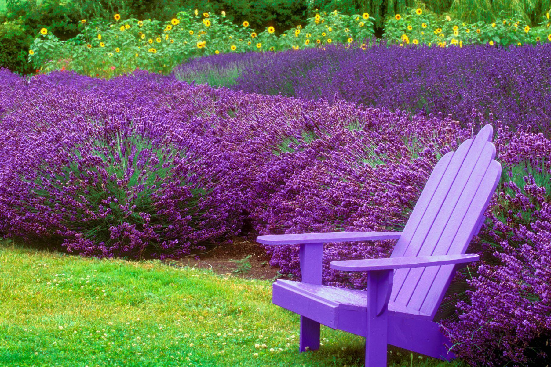 C mo dise ar tu jard n ideal flores ornamentales jard n for Como disenar tu jardin