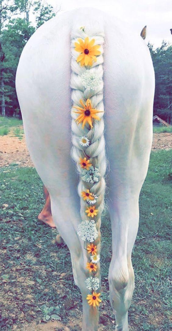 Ich würde nie zu einem eigenen Pferd, aber das sieht hübsch aus ...   pferd     geflochten ... #aber #aus #das #eigenen #einem #geflochten #hübsch #ich #nie #Pferd #sieht #wurde