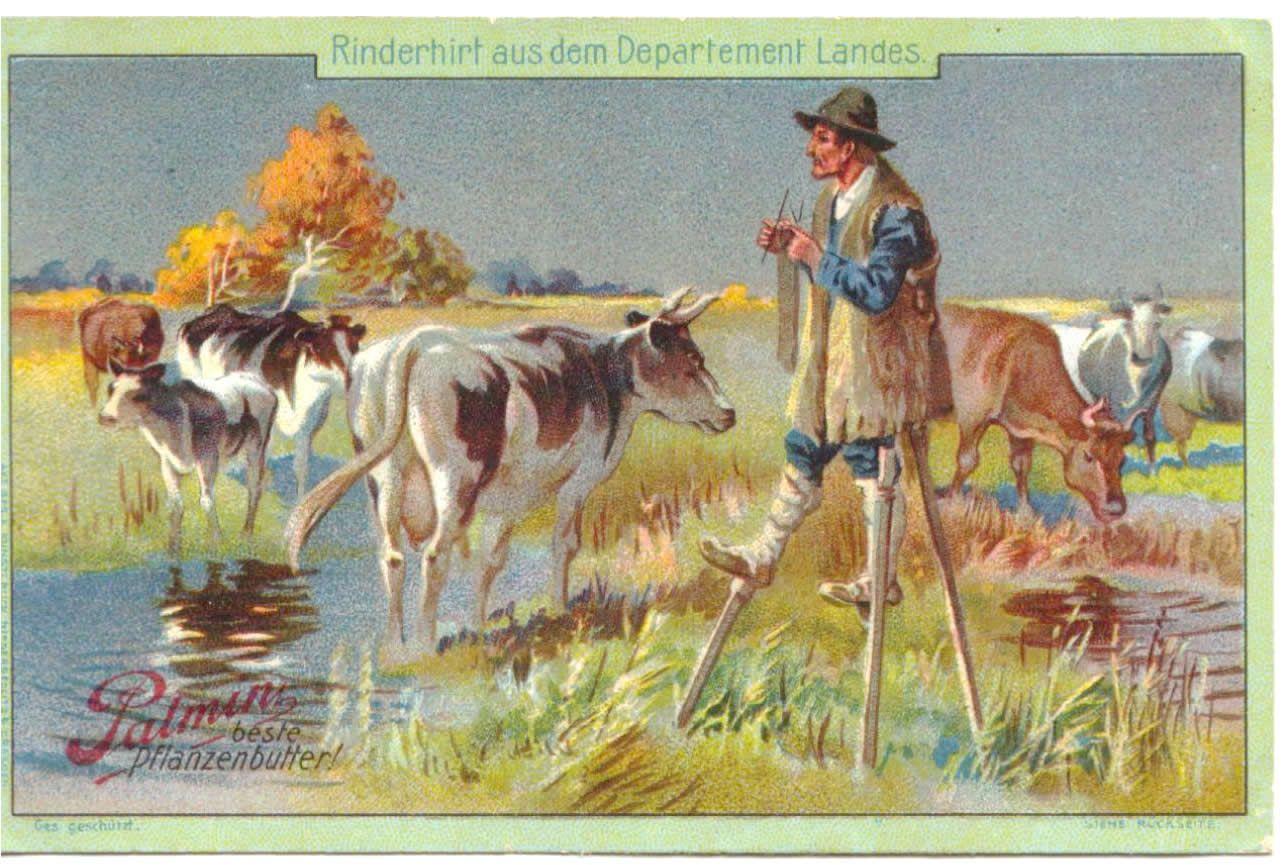 vaches gardees 2.jpg (1282×865)