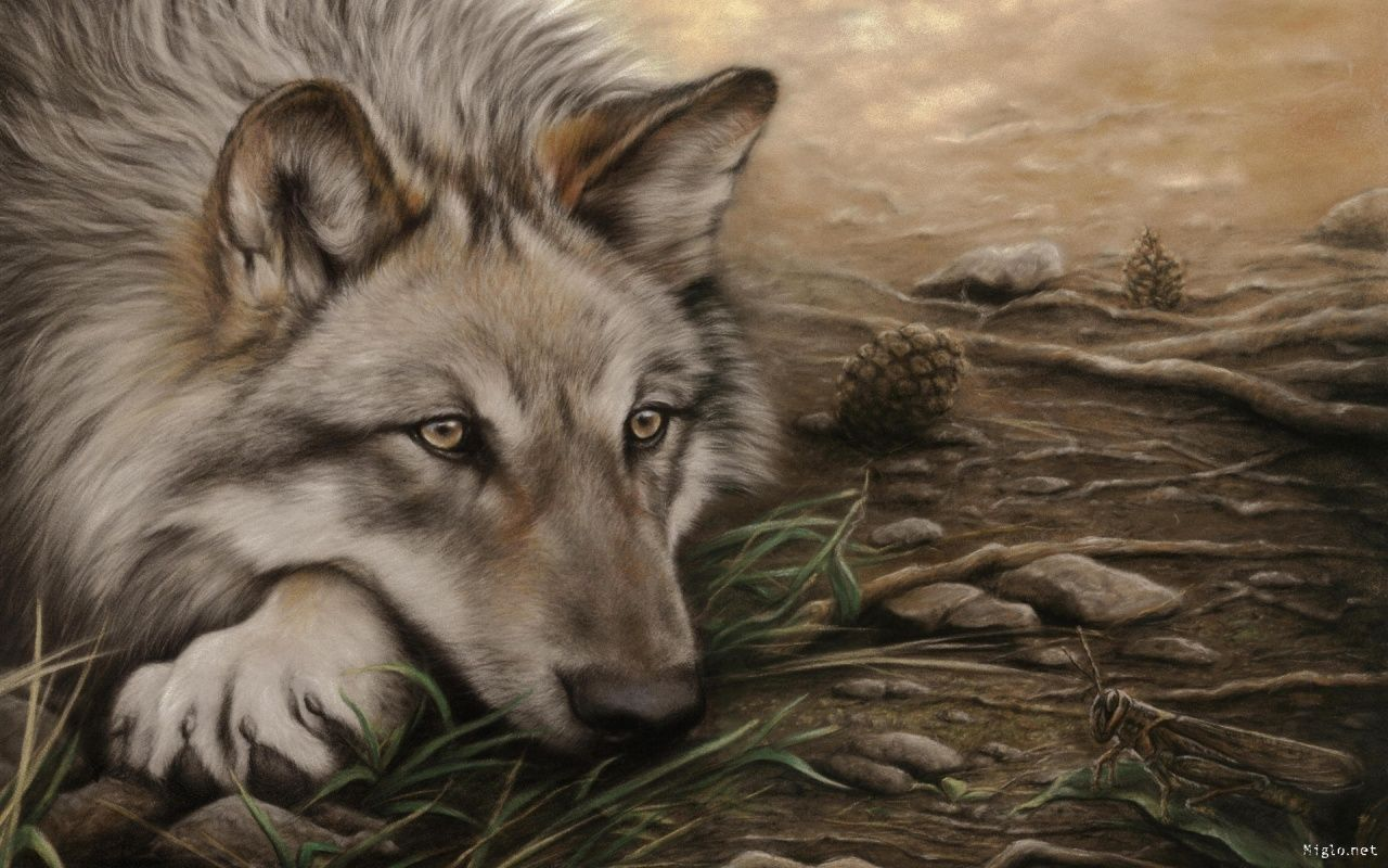 Dessin Loup Hd Wallpaper Loups Loup Dessin Animales Et