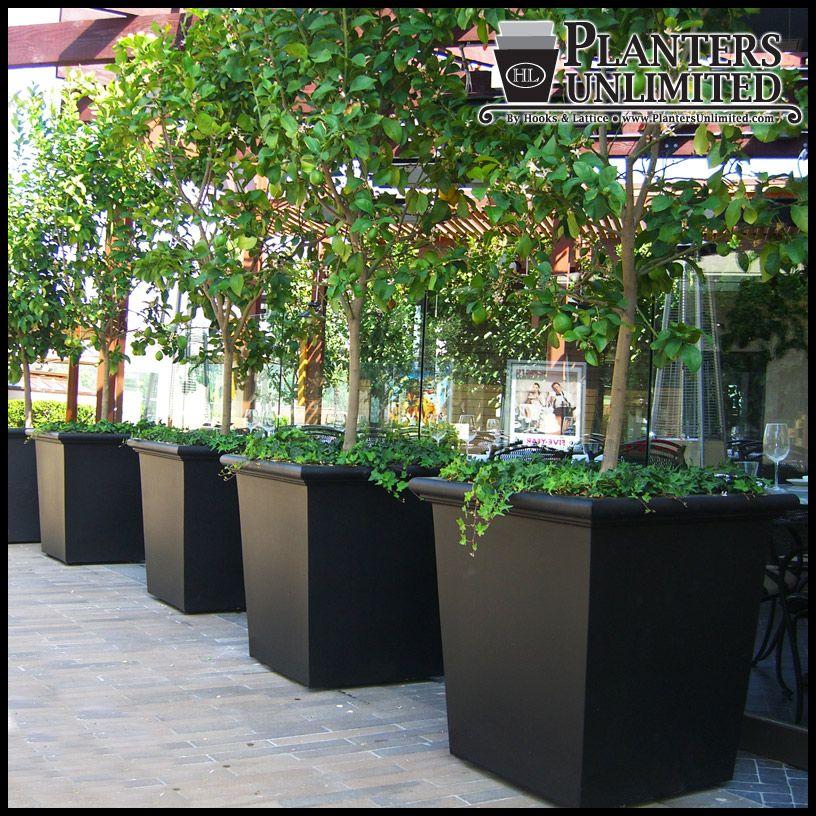 Square Fiberglass Planters - Commercial Sized Planters - Large ...