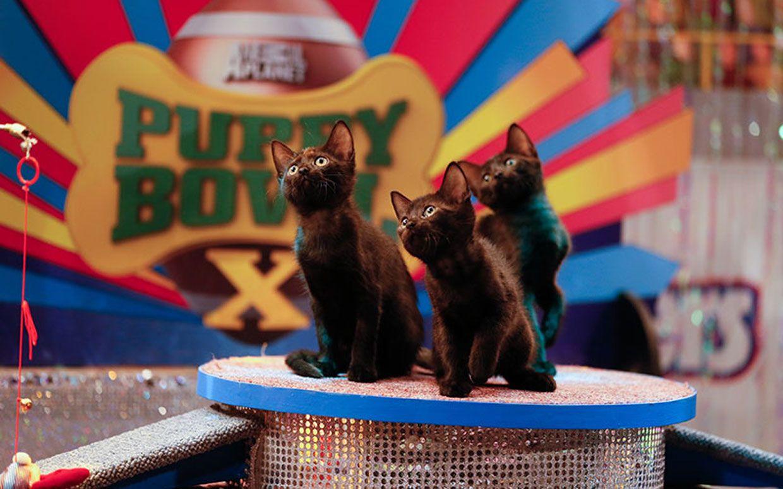 Puppy bowl pics deathternity puppy vs kitten bowls on super