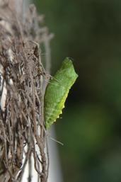 Vlinder tuin tips