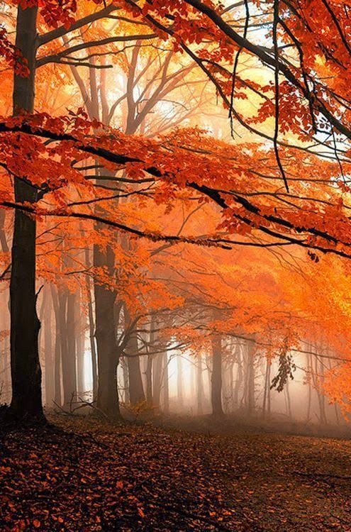 Colors of Autumn Leaves - #autumn #Colors #forests #leaves #fallscenery