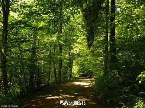 """""""Where will this path take you?"""" WWF Forests's photo."""