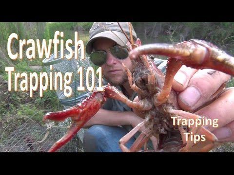 How To Catch Crawfish 101 W Gee S Trap Extender Crawfish Traps Crawfish Crawfish Bait