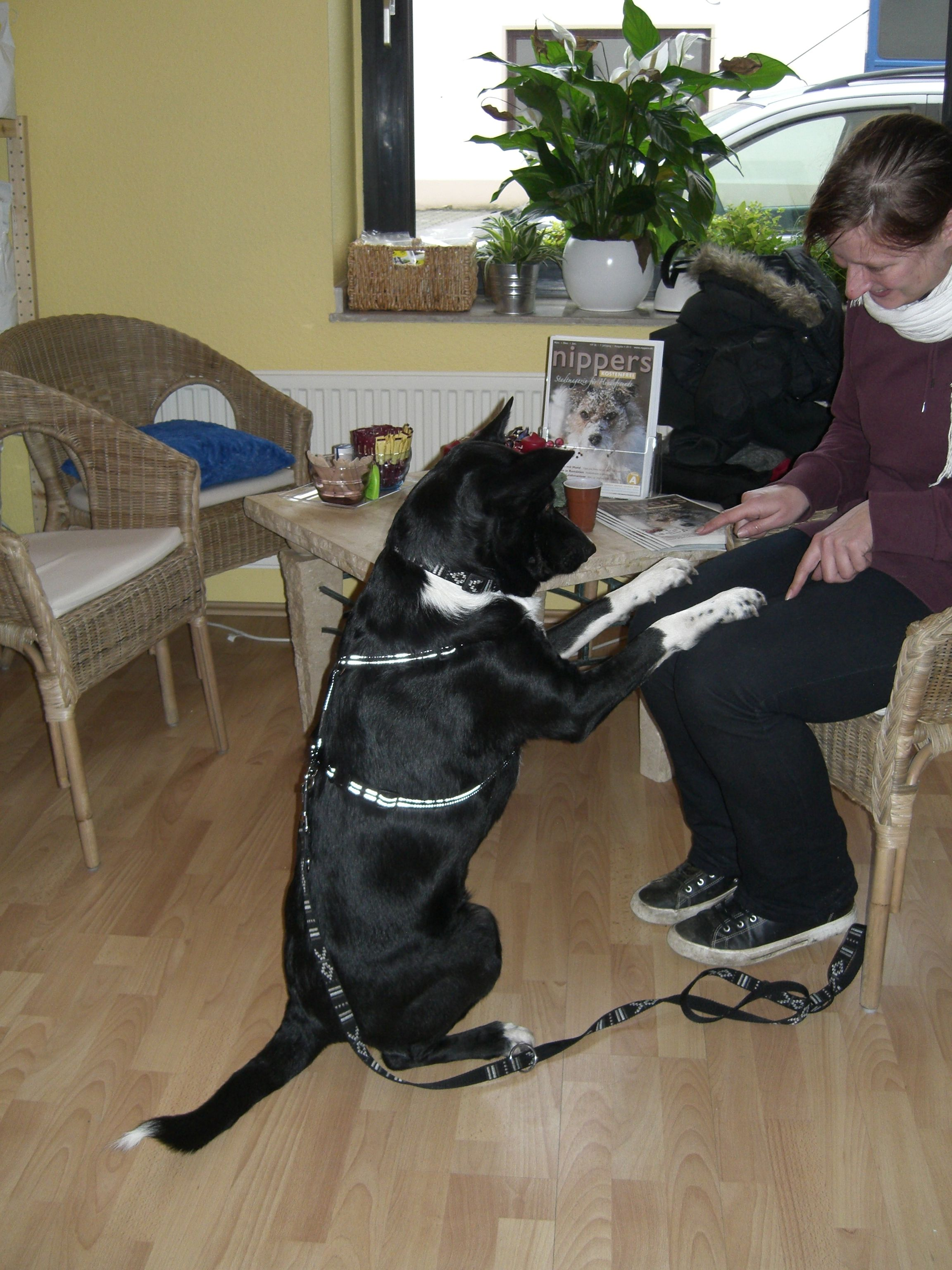 Grisu wurde aus dem Tierheim Düsseldorf adoptiert