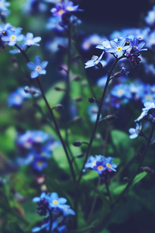 Black Background Blue Flower Photos Blue Flower Wallpaper Beautiful Flowers Wallpapers