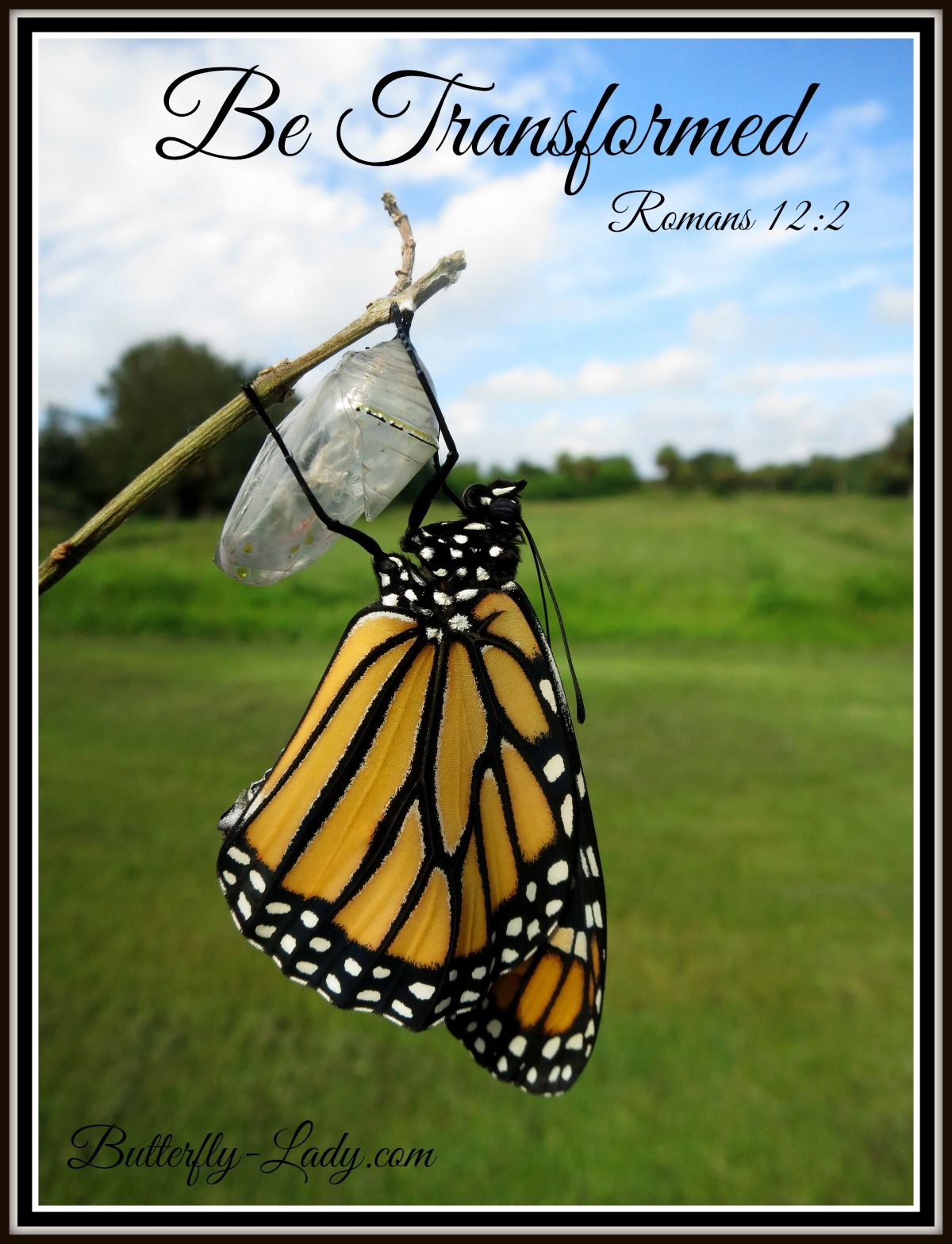 Be transformed. Butterfly quotes, Butterfly inspiration