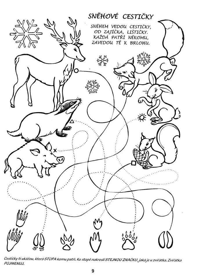 Zvieratka V Zime Projekty Na Vyzkouseni Preschool Education A