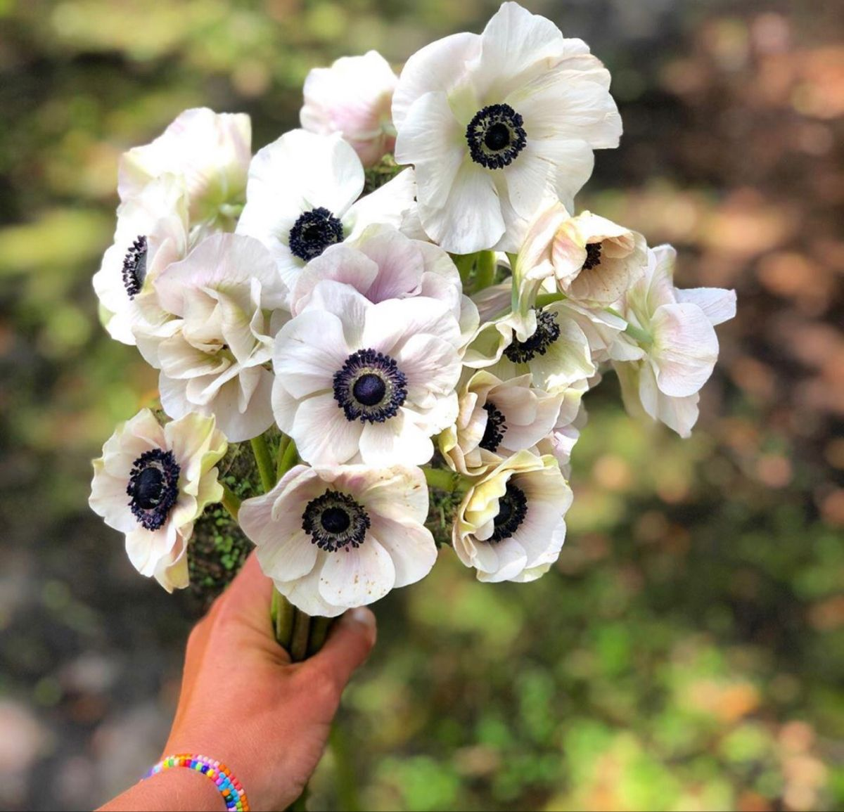 Anemone Flower In 2020 White Anemone Flower Anemone Flower Flowers For Sale
