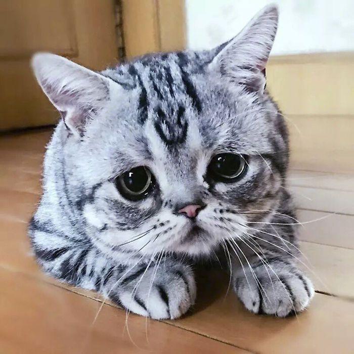 Meet Luhu The Saddest Cat In The World Whose Photos Will Break Your Heart Kittens Cutest New Memes Cute Cats