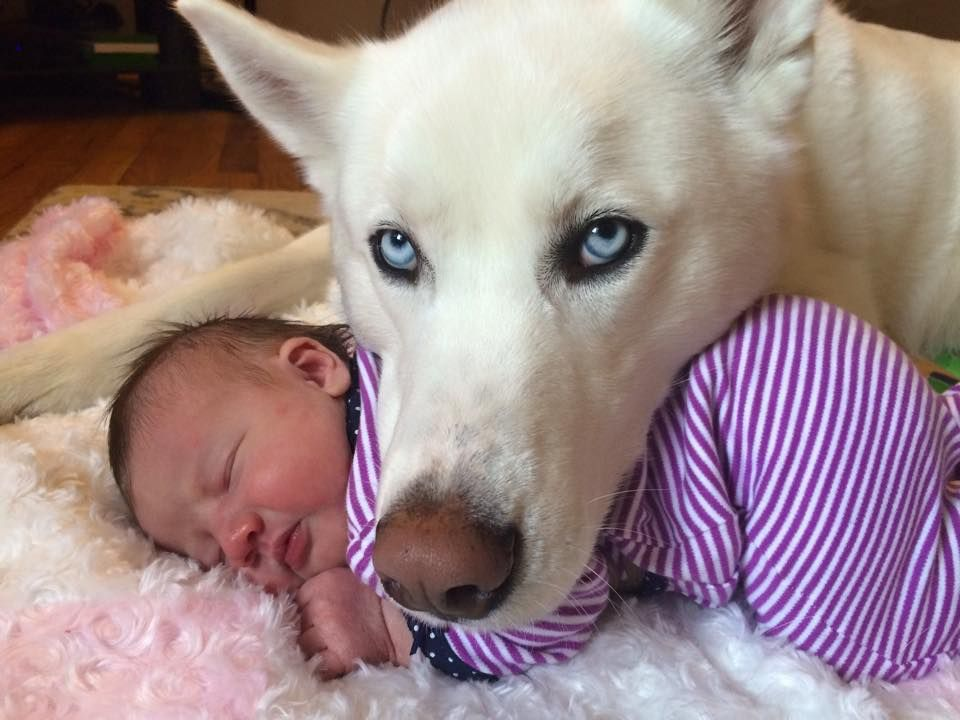 No one touches the baby! http://OfficialHuskylovers.com/