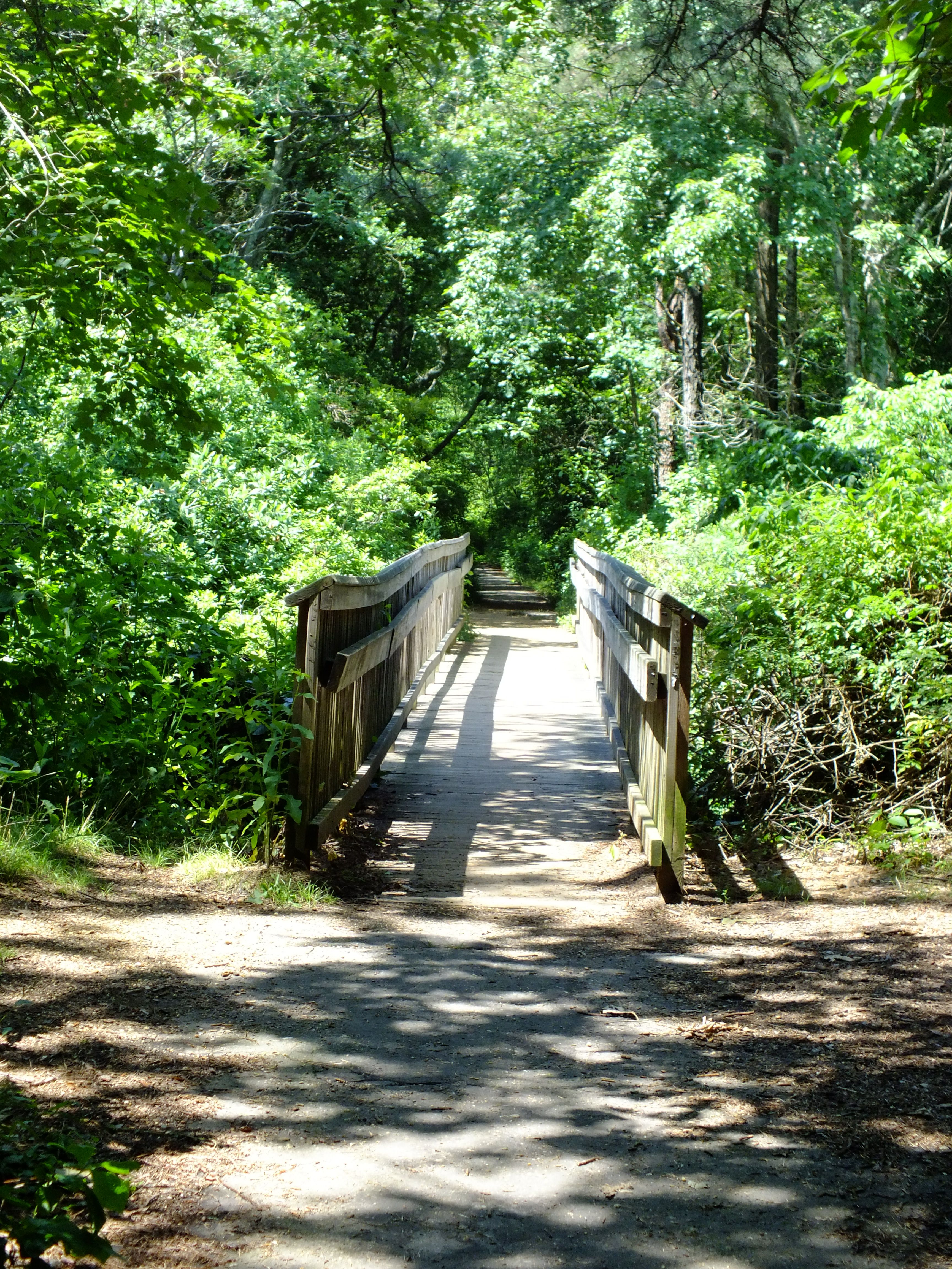 Parvin State Park in Pittsgrove, NJ. State parks, Places
