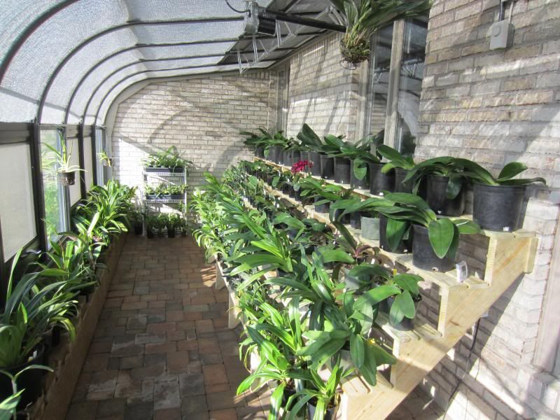 Shelf For Orchids My Dream Green House Greenhouse 640 x 480