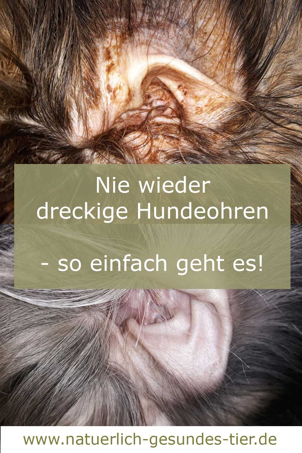 Photo of Clean dog ears – it's that easy