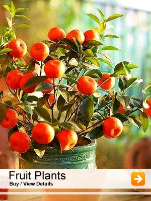 Home With Images Plants Fruit
