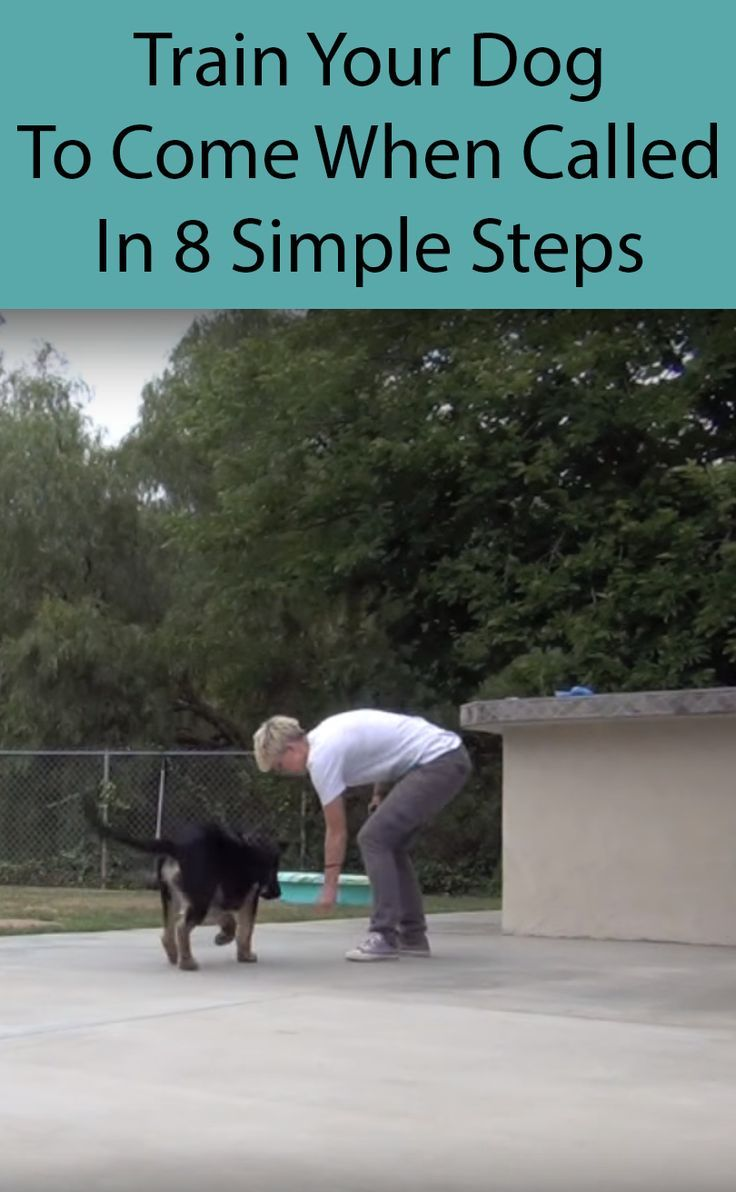 Teach Your Dog To Come When Called Dog Training Dog Training