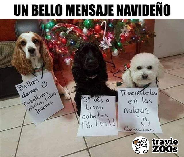 """Photo of TravieZOOs en Instagram: """"Nada como comenzar este día con un mensaje hermoso y positivo de diciembre 🎄🐶😝 #pirotecnia #funny #message #dogs #dogs"""""""