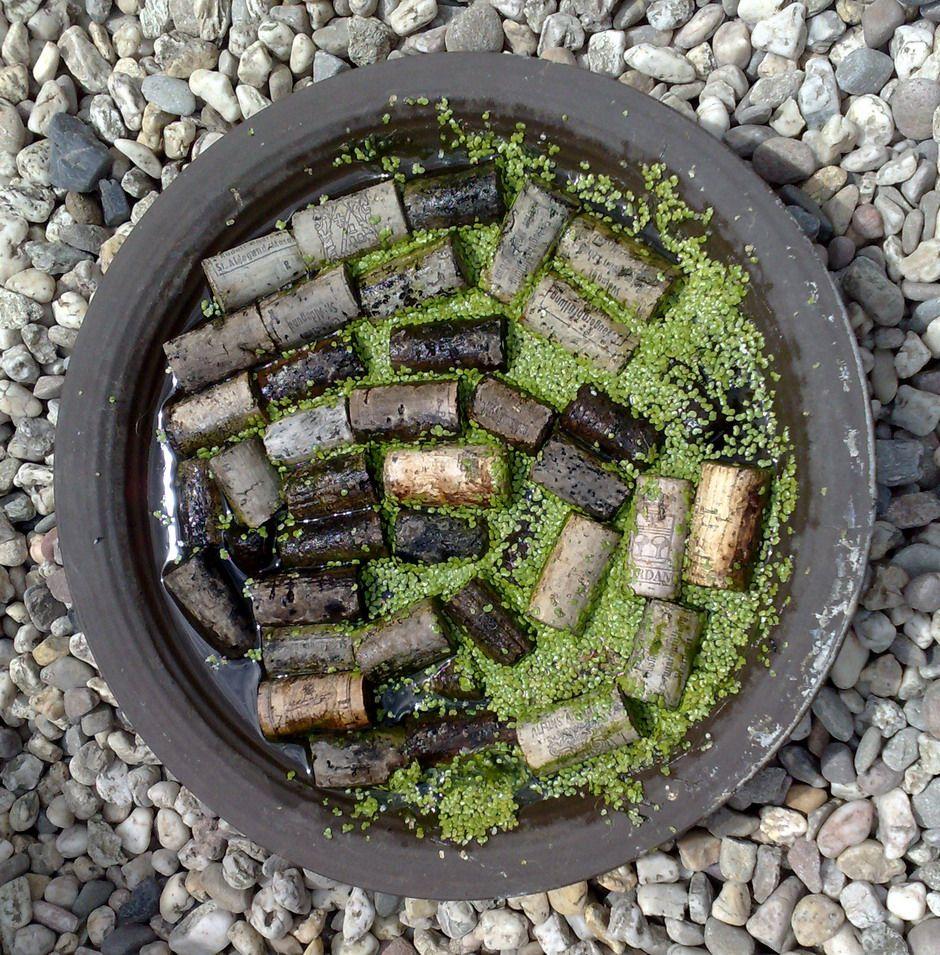 Insektentranke Vogelbad Garten Bienenfreundlicher Garten Garten