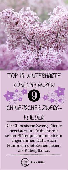 Winterharte Kübelpflanzen: Unsere Top 15 #frostings